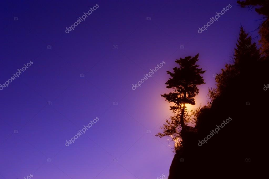 Silhouette Of Tree On A Hill