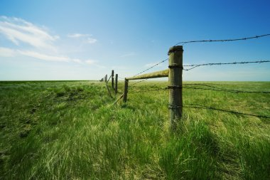 Barbed Wire Fence In A Grassy Field