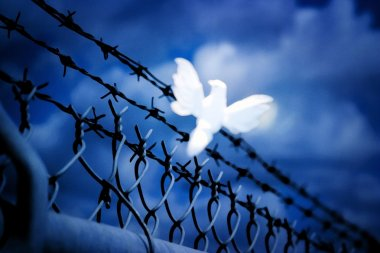 White Bird Sitting On Barbed Wire Fence