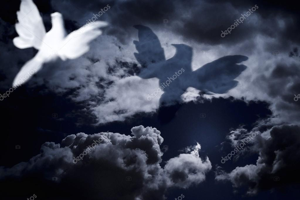 White Dove Flying Into Cloudy Skies