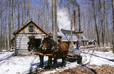 Horse And Wagon By Sugar House