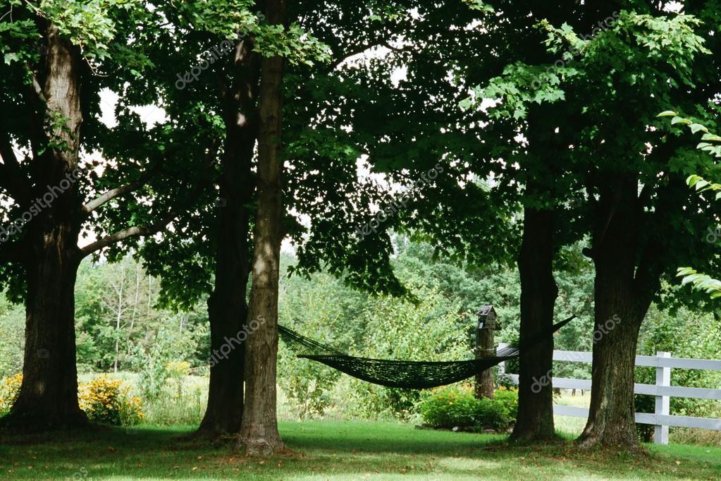 Hammock Hanging Between Maple Trees