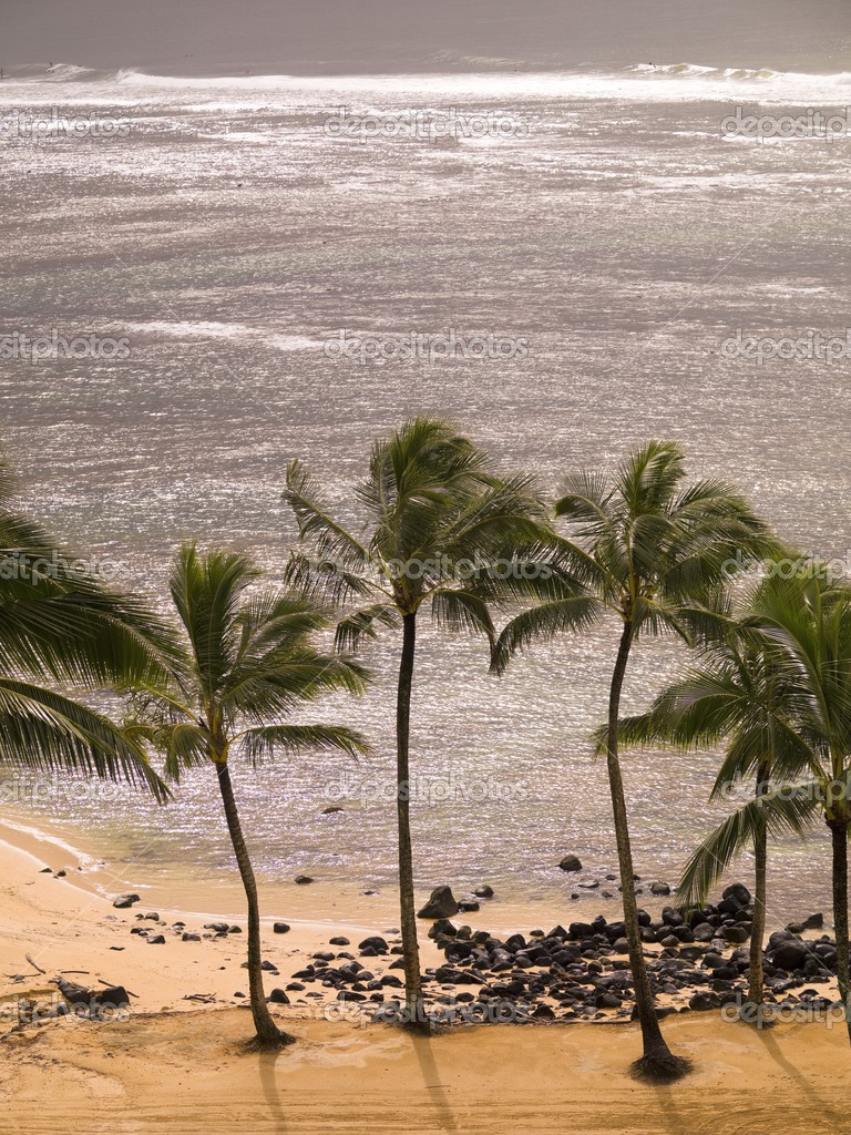 Palm Trees And Beach, Kaui, Hawaii