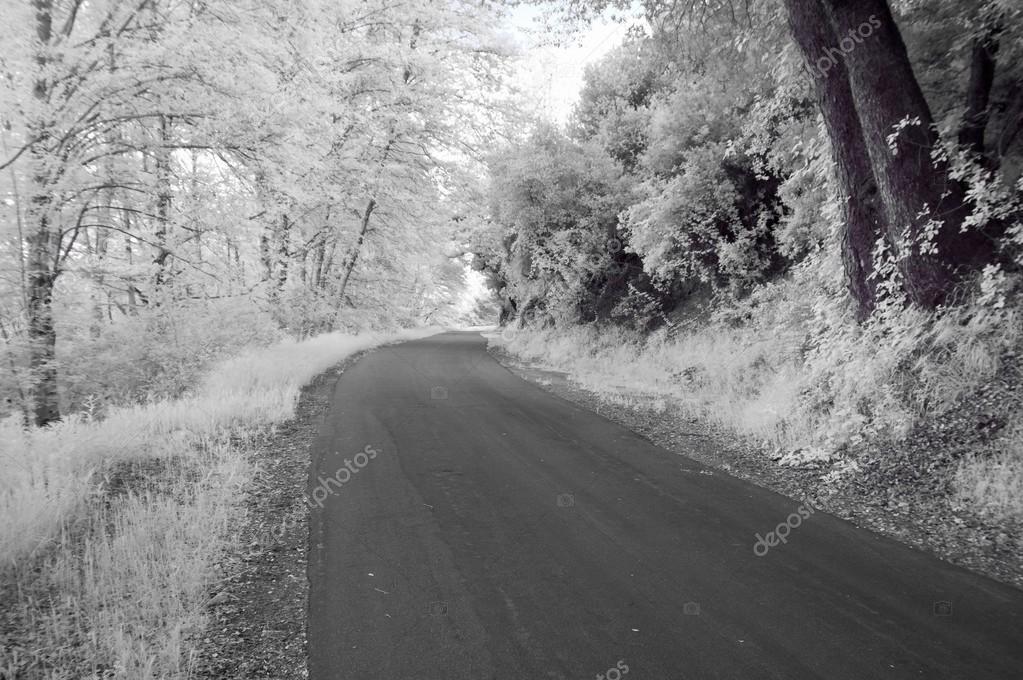 Road Along West Fork Of San Gabriel River, California, Usa