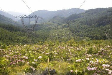 Power lines and wildflowers