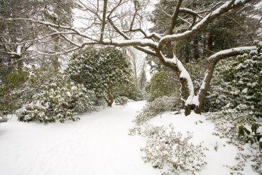 Winter Snow, Portland Park, Oregon, USA
