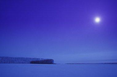 Bare Winter Landscape