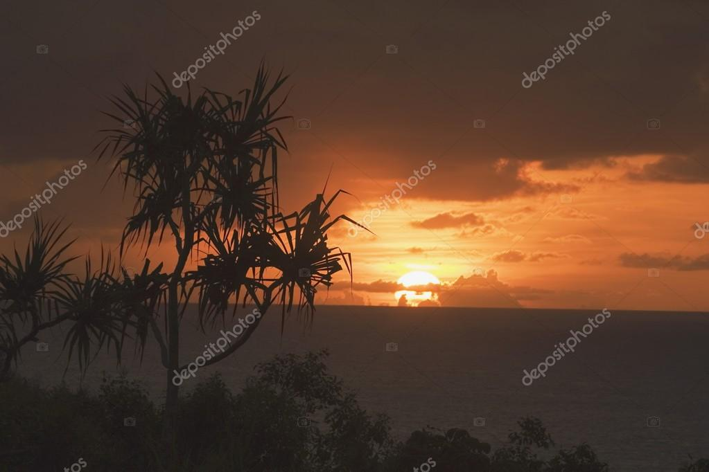 Palm Tree Near The Pacific Ocean, North Kauai, Hawaii, Usa