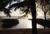 Fotografia alba sopra un lago con una silhouette degli alberi sulla riva