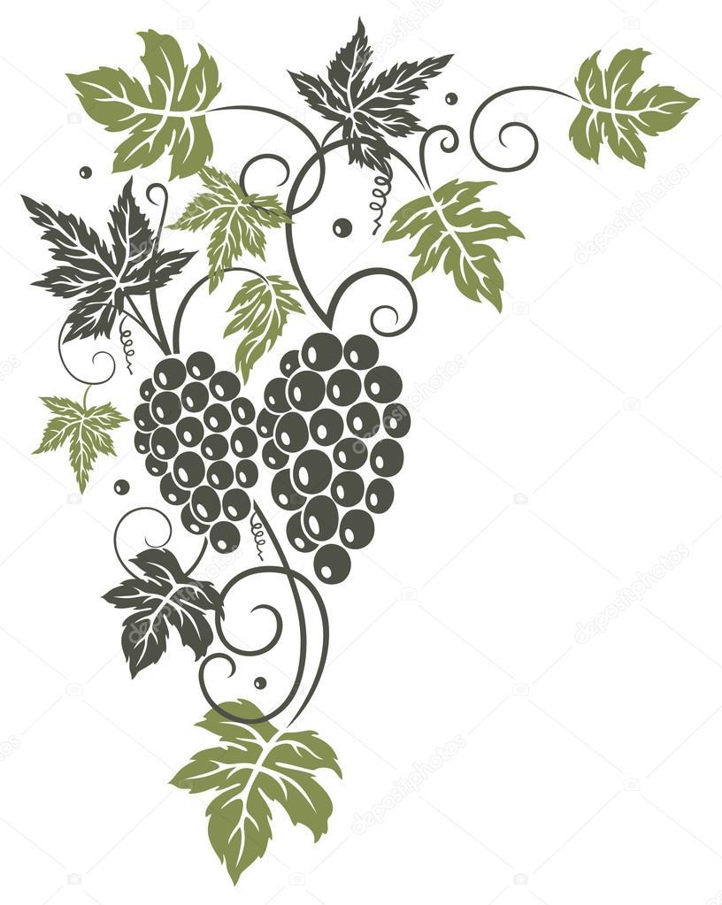 Winorośli Liści Winogrona Grafika Wektorowa Christinekrahl