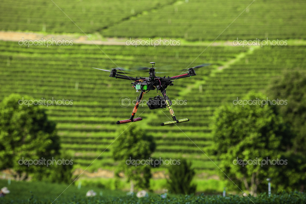 Rc helicopter flies over the tea plantation