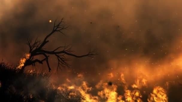 lonley strom v ohni. smyčka