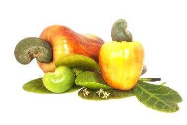Cashew Nut Apple at white background