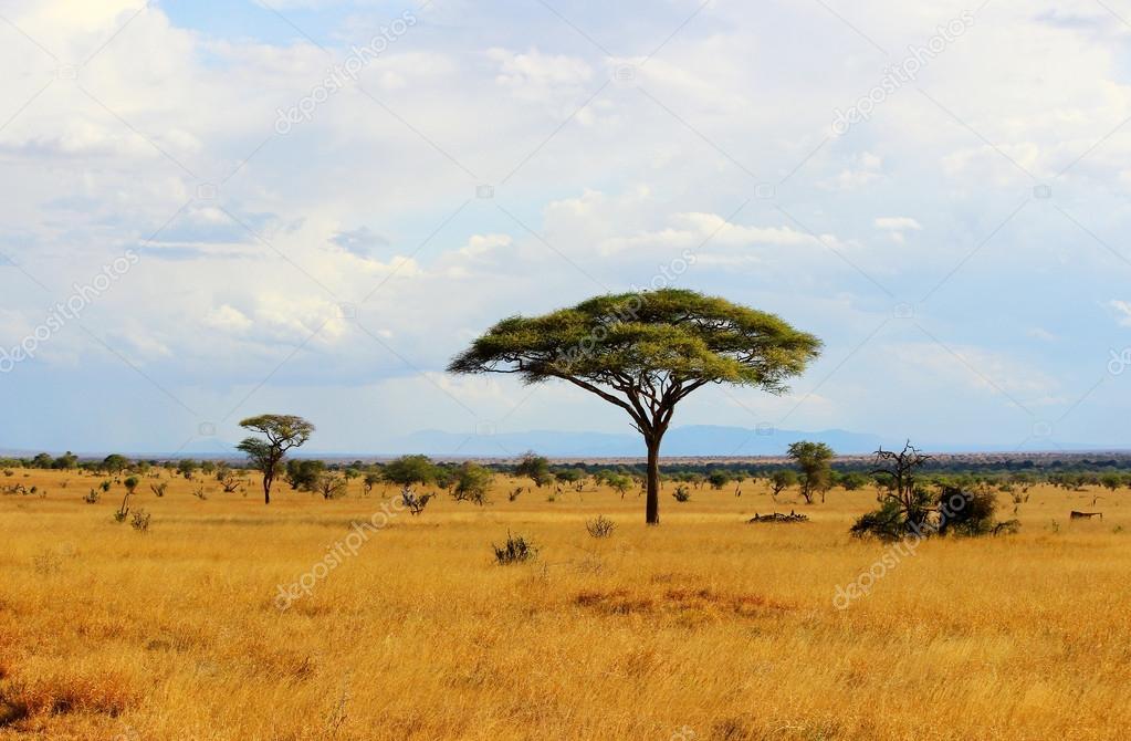 paisaje de sabana africana fotos de stock andycandy 31860689