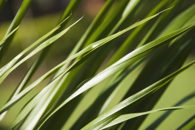 Close-up of tall grass, Gurgaon, Haryana, India stock vector