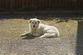 Fotografie pes sedí v poli
