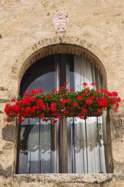 Flowers on display on a window