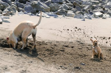 Puggle Sand Shower