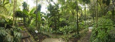 Tropical Garden, Malaysia