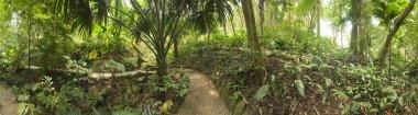 Tropical Garden, Malaysia stock vector