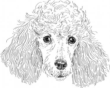 Toy Poodle Premium Vector Download For Commercial Use Format Eps Cdr Ai Svg Vector Illustration Graphic Art Design
