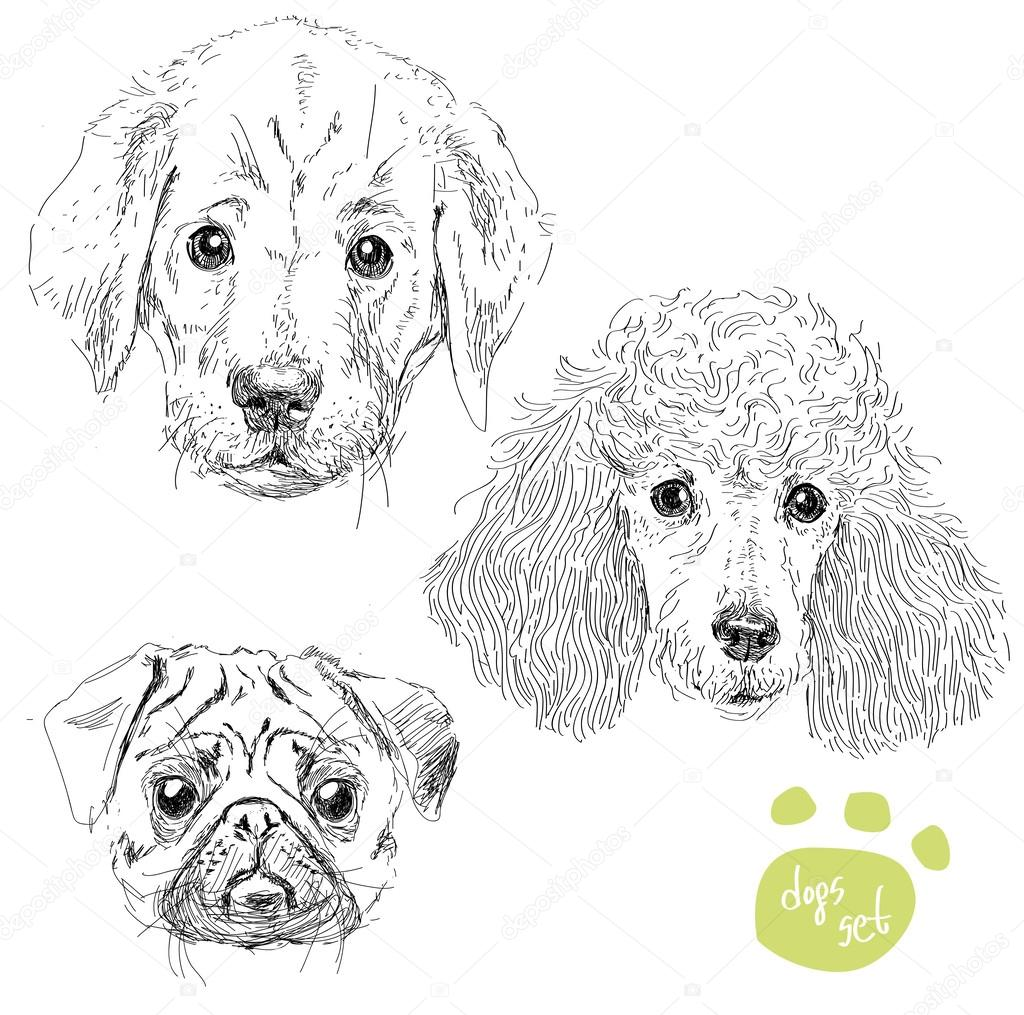 dogs head set pug poodle puppy of labrador isolatedvector illustration hand draw realistic style vector by iriskana