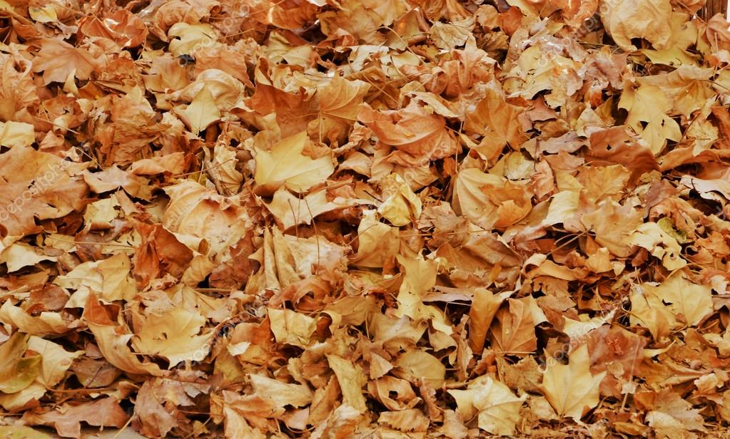 Dry Autumn Leaves