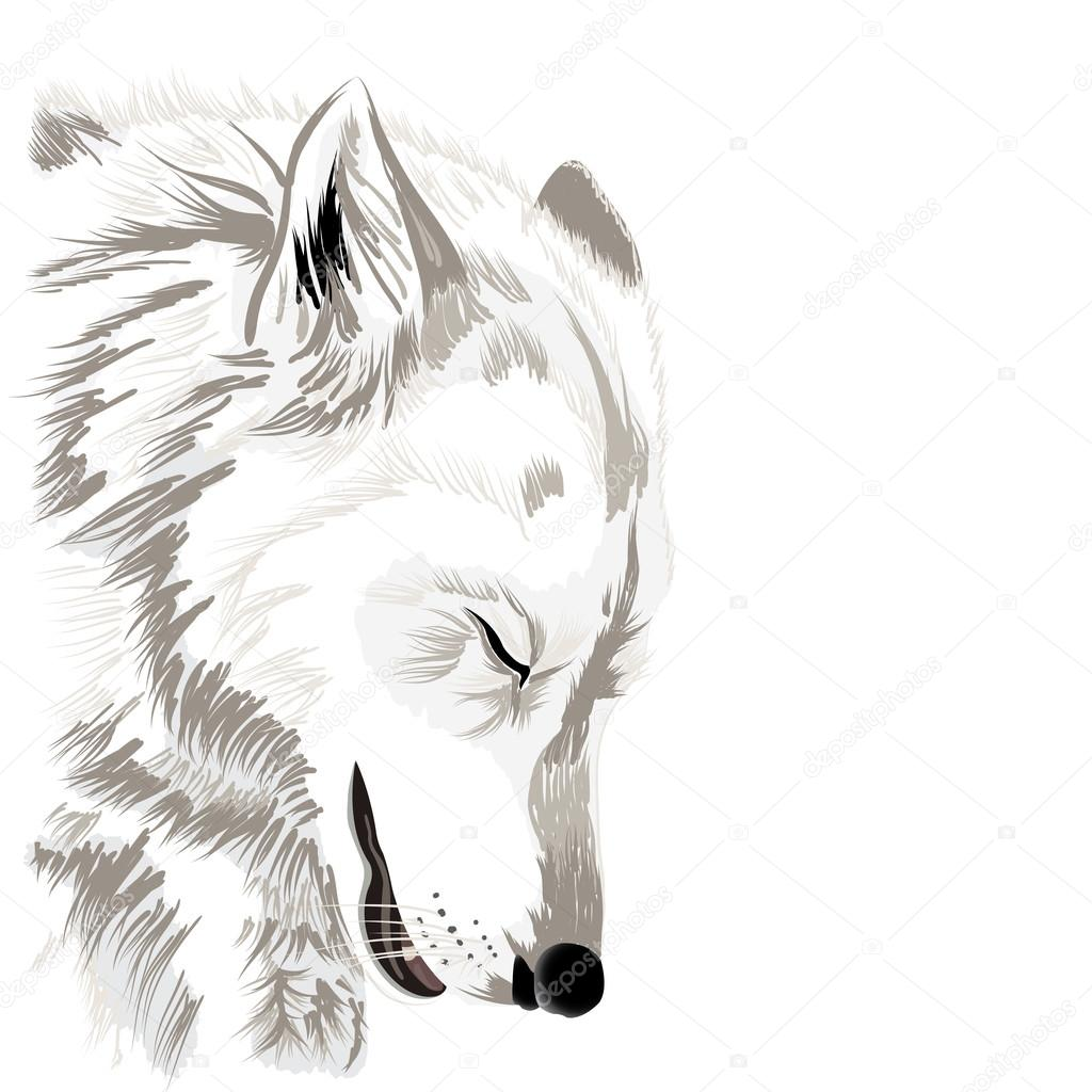 Sketch of a wolfs faceon white background vector by