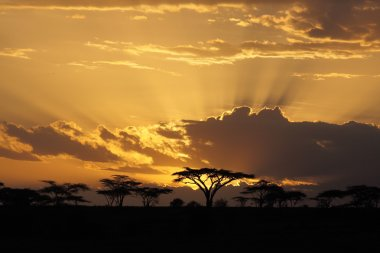 Sunset in Africa with acacia tree on background