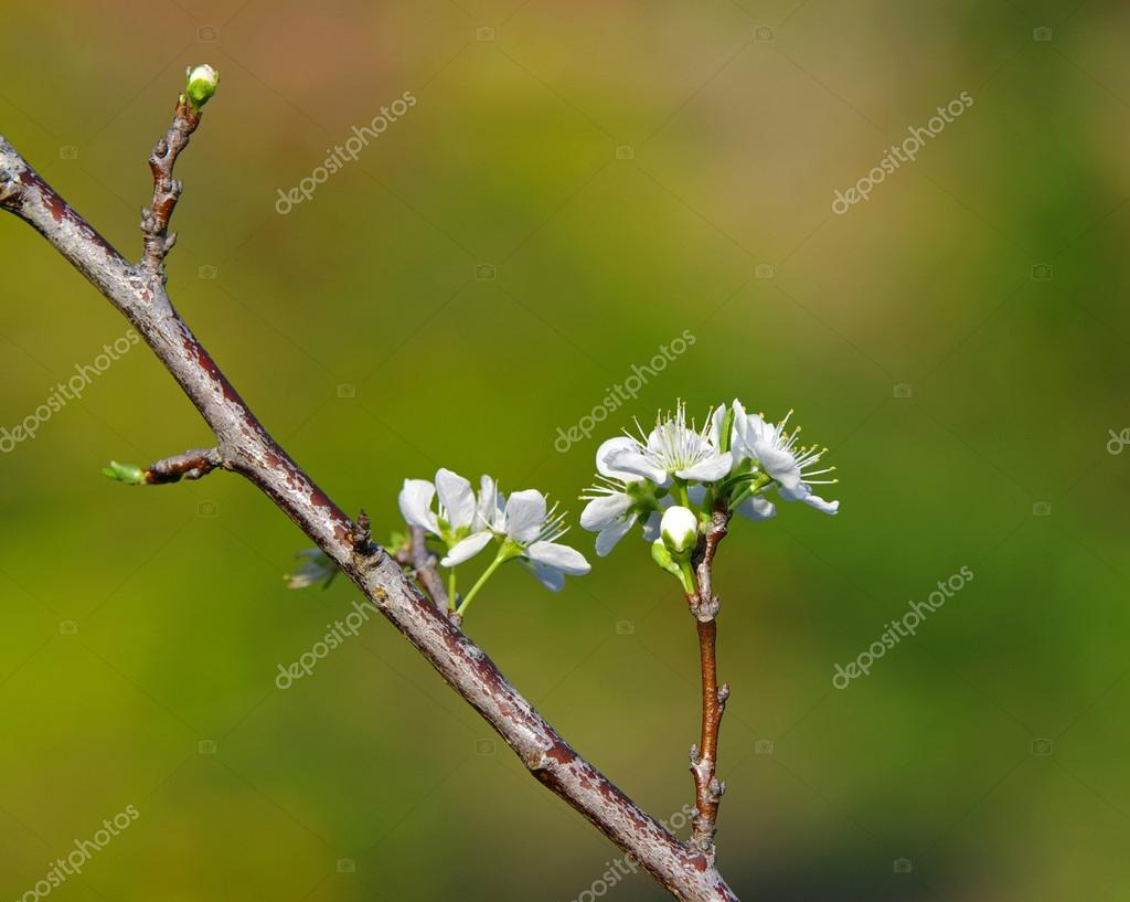 Peach Flowers on green background
