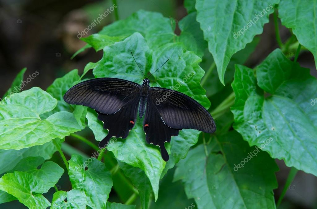 a winged butterfly on leaf