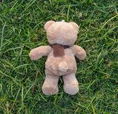 Maci barna színű sál a fűben, hátsó