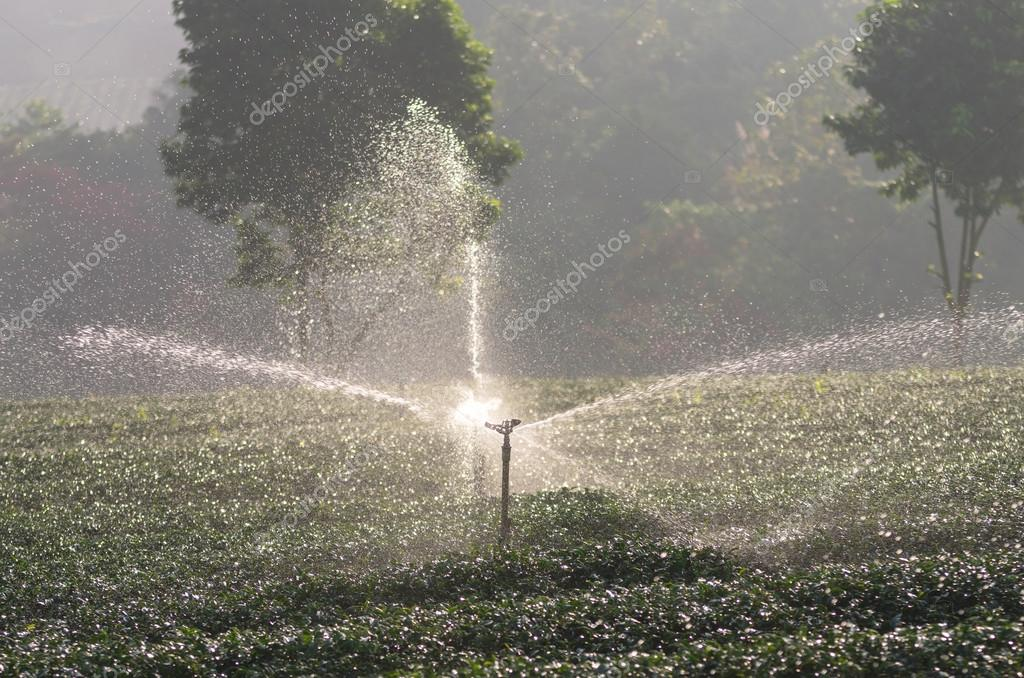 water sprinkler in tea field on the morning