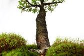 Fotografie Tanne mitten in der Natur mit Zweigen und Gras grün