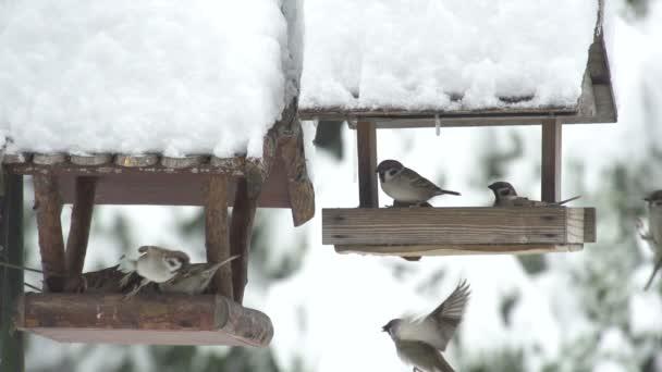 madarak eszik az adagoló