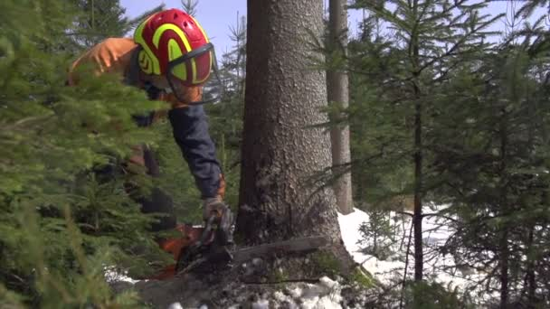Forester cutting down a tree