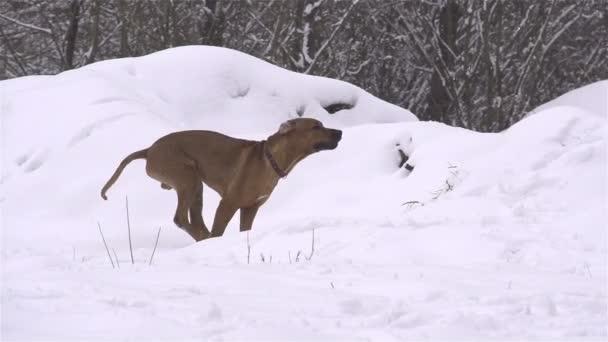 psí zábava v zimě