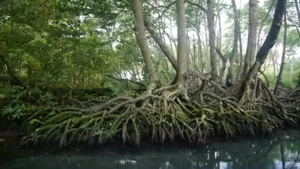 mangrovové stromy v Dominikánské republice