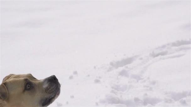 Dog catching a ball
