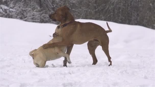 psi v zimě