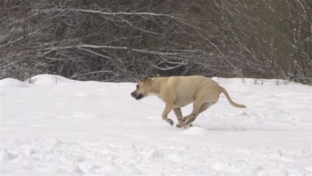 pes hrát načtení v čerstvém sněhu
