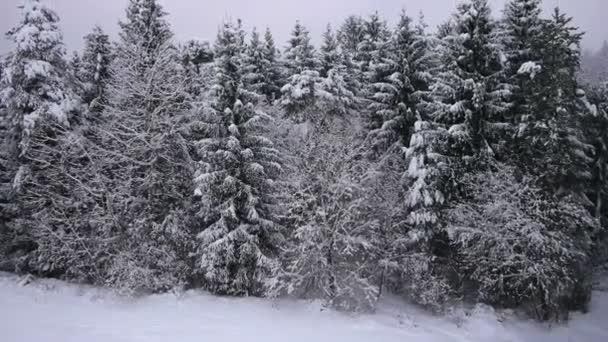 přelet do zasněženého lesa