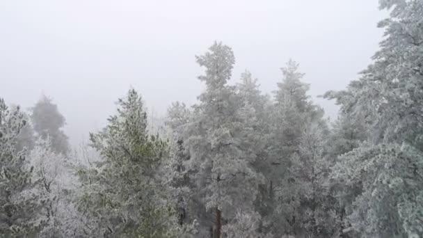 fagyasztott erdő