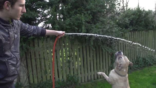 pes hrát s vodou