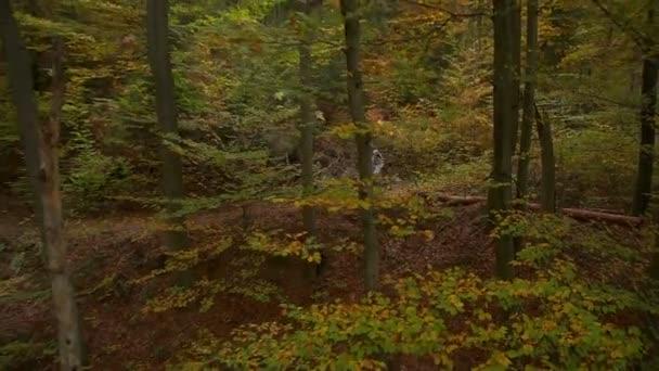 sjezdové motorkář v podzimním lese