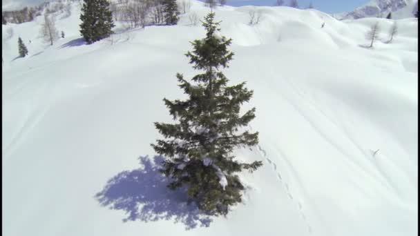 kolem stromu v Alpách