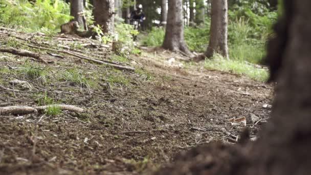 motorkář sjezdech lesem