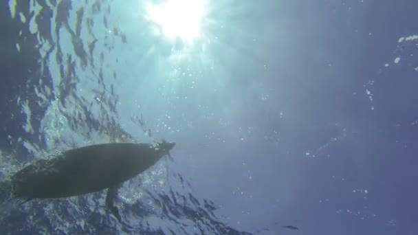 surfař pádlování v čisté vodě