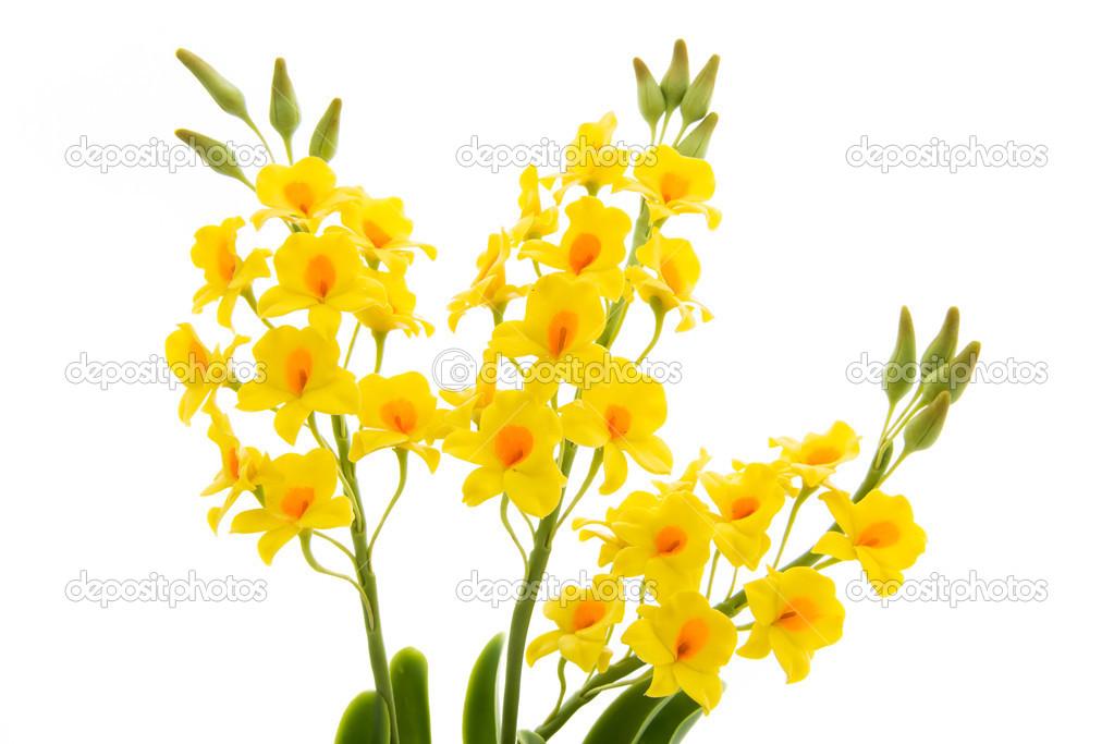 Light yellow orchid handmade flowers isolated on white backgroun light yellow orchid flowers isolated on white background flowers handmade from the soil photo by sirastockid08 mightylinksfo