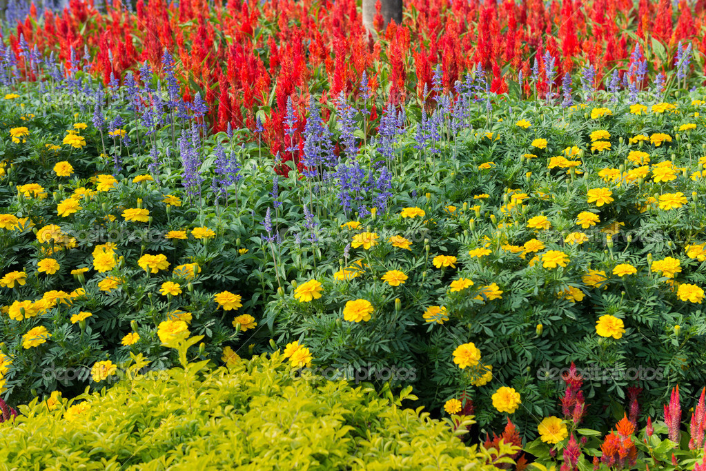 Colorful Flower Garden Background Stock Photo Sirastockid - Colorful flower garden background